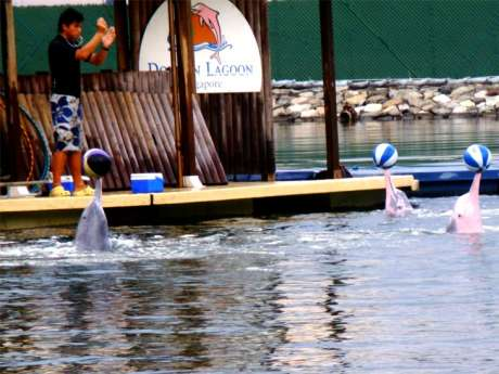 Dolphin show Singapore